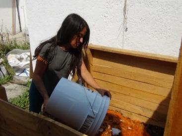Volteado de materia fresca del baño seco vivo en el compostero