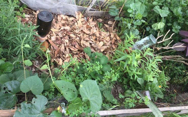 Mulch + composta después de cosechar
