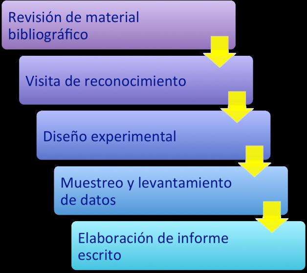Proceso diagnósticos